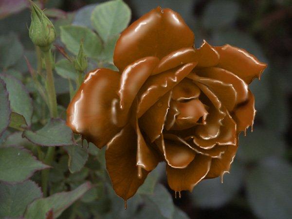Шоколад: вред и польза