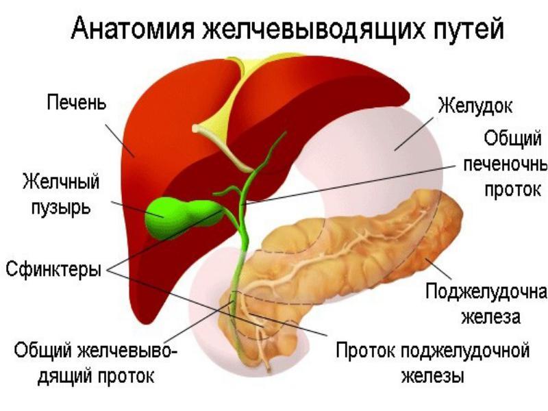 Рекомендации при заболеваниях печени и желчевыводящих путей