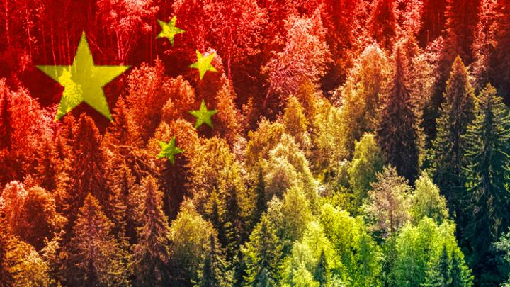 Нужно ли спасать русский лес от китайцев?