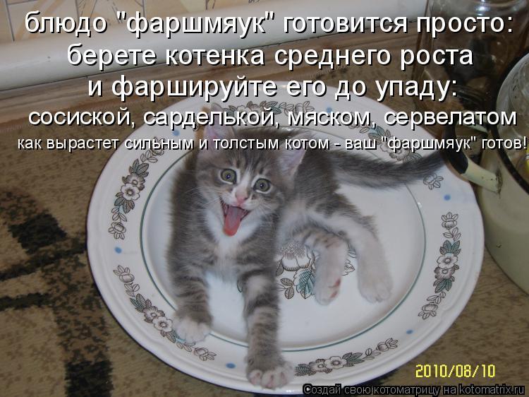 """Котоматрица - блюдо """"фаршмяук"""" готовится просто: берете котенка среднего роста и фар"""