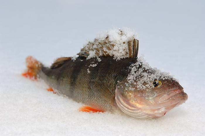 Зимняя рыбалка, рыбалка на льду, снасти для зимней рыбалки, рыбалка зимой, блесна, мормышка, клевое место, любительская рыбалка, сезон зимней рыбалки, что нужно для зимней рыбалки