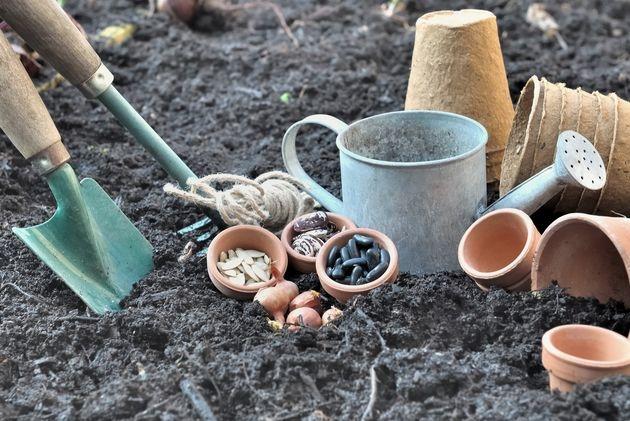 Посев семян: поспешишь – людей насмешишь