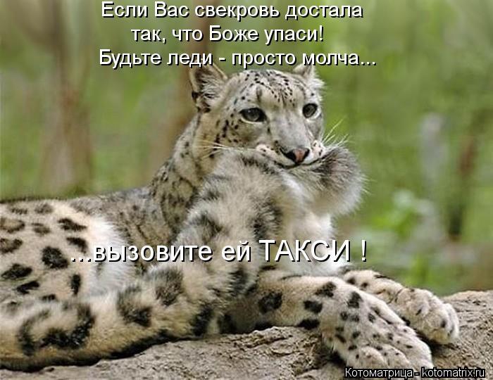 Котоматрица: Будьте леди - просто молча... ...вызовите ей ТАКСИ ! Если Вас свекровь достала так, что Боже упаси!