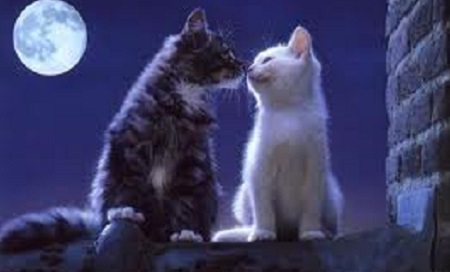 Как удалить запах кошачьей мочи.