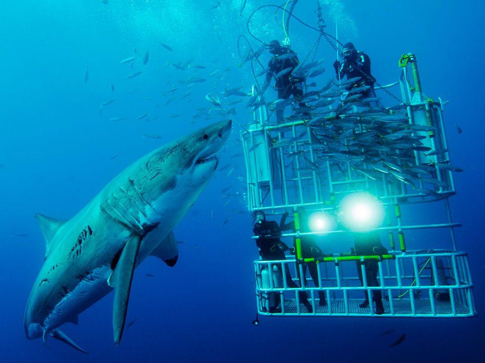 178 Лучшие фото National Geographic за декабрь 2011