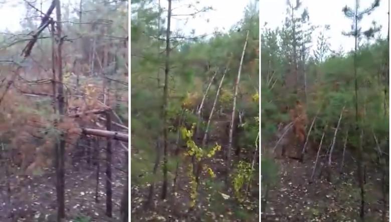 В лесах Самарской области гр…