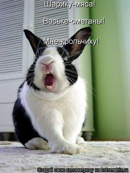 Котоматрица: Шарику-мяса! Ваське-сметаны! Мне-крольчиху!