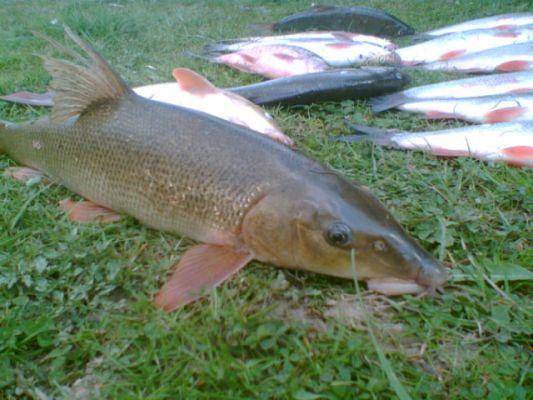 рыбалка на усача