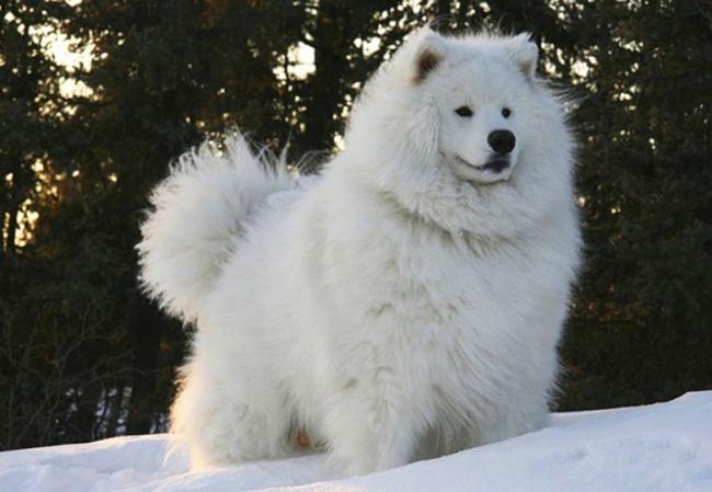 20 животных, которые утеплились к зиме