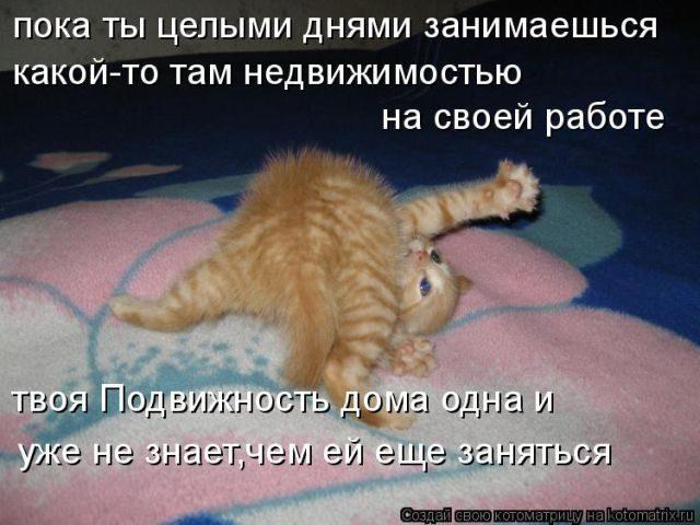 Забавные котоматрицы, которы…