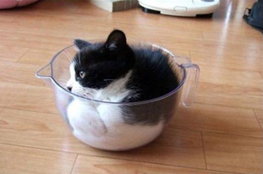 1207001472_cup_of_cat