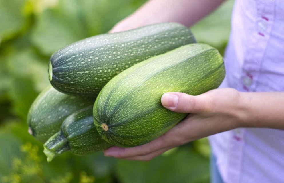 Семена кабачков лечат диабет, последствия стресса, укрепляют нервы