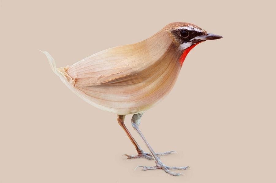 Луковая птица, аллигаторный бри и крылатый соляной шейкер