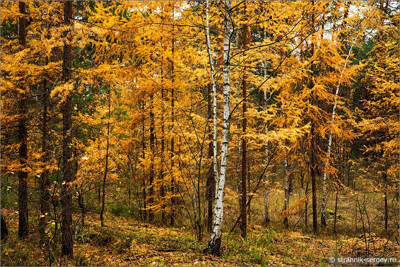 Осенняя прогулка по заповедному лесу