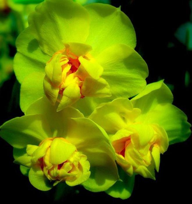 5230261_orhideya14 (660x700, 217Kb)