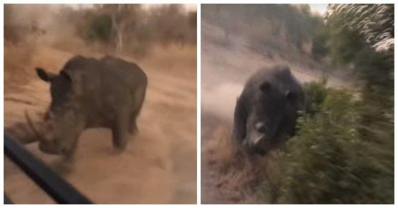 Разъяренный носорог пустился в погоню за группой туристов