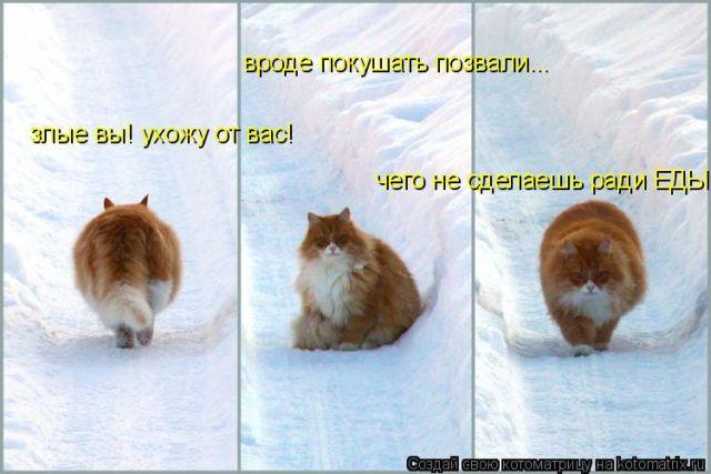 Просто очень красивые кошаки)))
