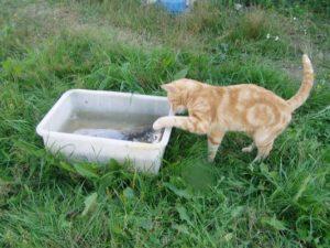 Незабываемая первая поездка на рыбалку нашего кота Васи
