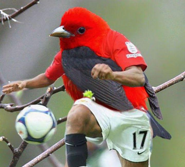 Птицы с человеческими руками