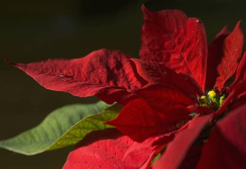 Смертельно опасные цветы