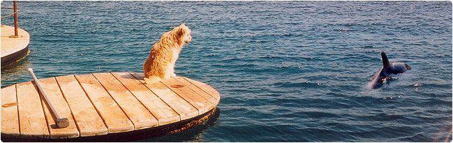 Про собаку-дельфиняку. животные, собаки, дельфины