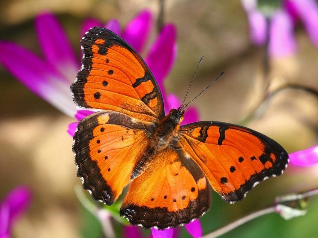 """Бабочки превращаются в """"роковых"""""""