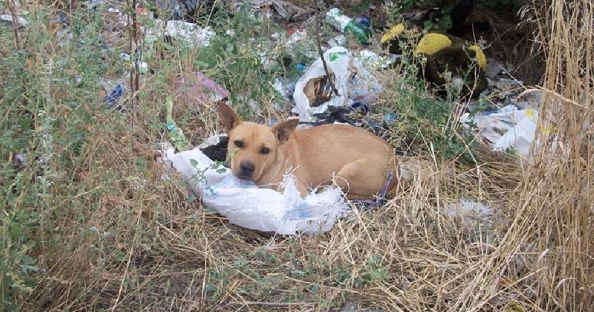«Помоги мне! Я тебе верю!» На свалке нашли пса в завязанном мешке!