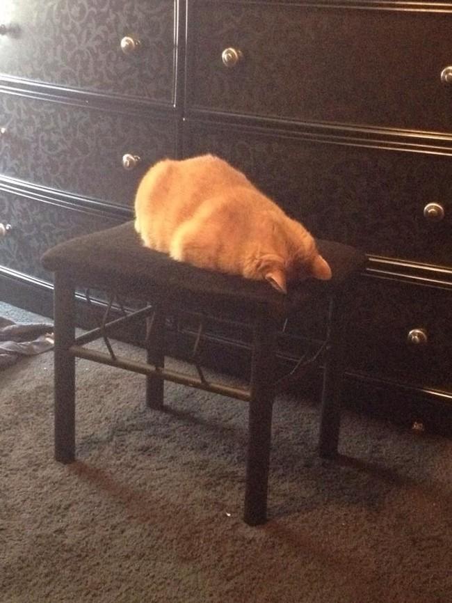 catrules05 15 правил жизни настоящего кота