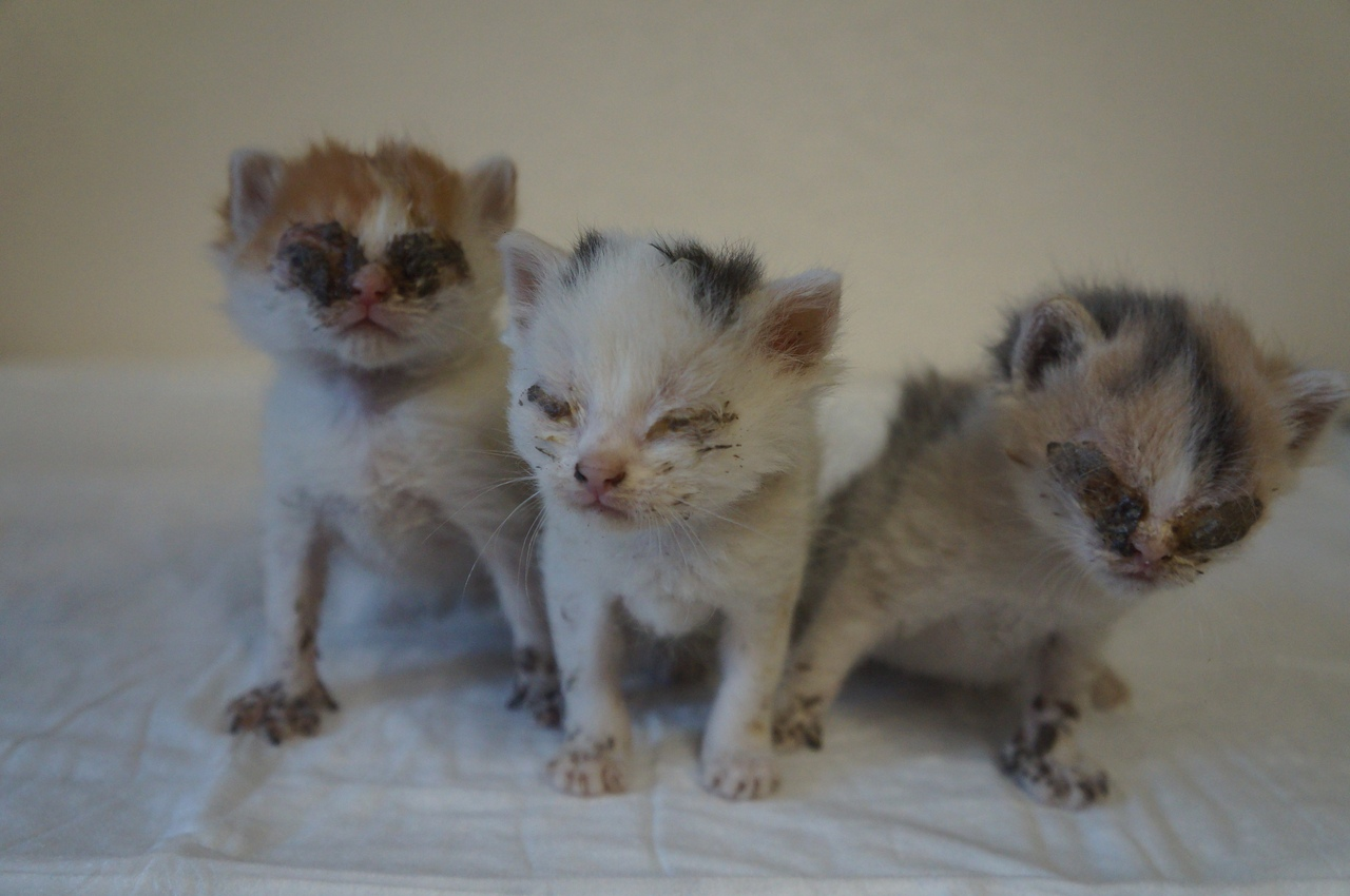 Маленьких котят бросили на произвол судьбы… Они борются изо всех сил!