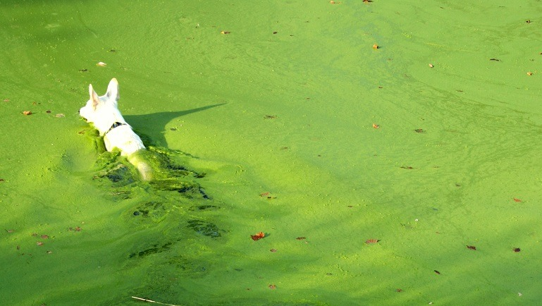 Мертвая вода: четыре собаки погибли на глазах растерянных хозяев после купания в токсичном озере