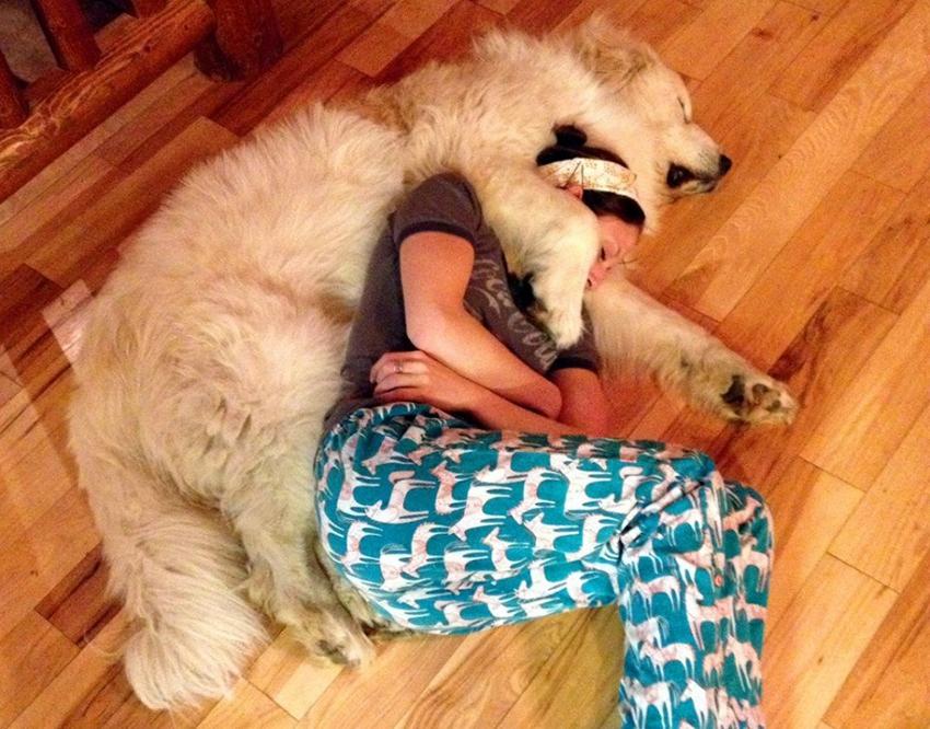 20 собак, которые понятия не имеют о границах личного пространства личное пространство, собака
