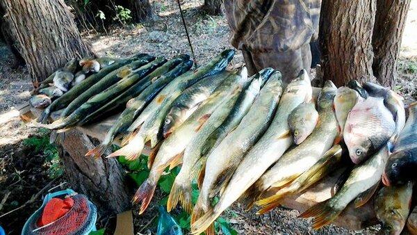 Отличная новость для рыбаков…
