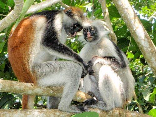 Топ-25: редкие виды приматов, которые могут исчезнуть с лица Земли в ближайшие сто лет
