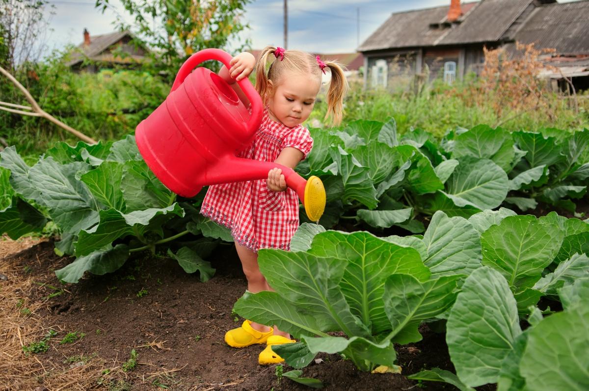 Когда и сколько нужно поливать овощи
