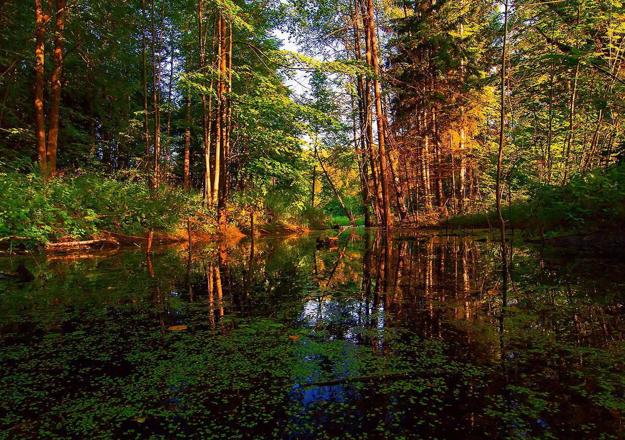 уничтожение леса в берендеевом царстве актера Александра Лыкова