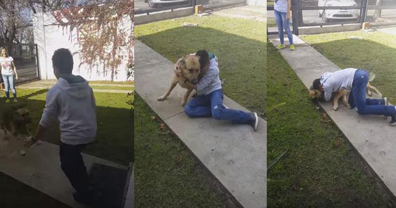 Мальчик и пес не виделись 8 месяцев. Момент их встречи трогает до слез!