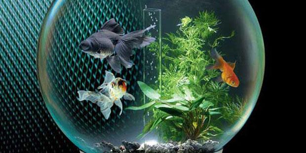 Аквариум - частичка живой природы. Необычные дизайны аквариумов