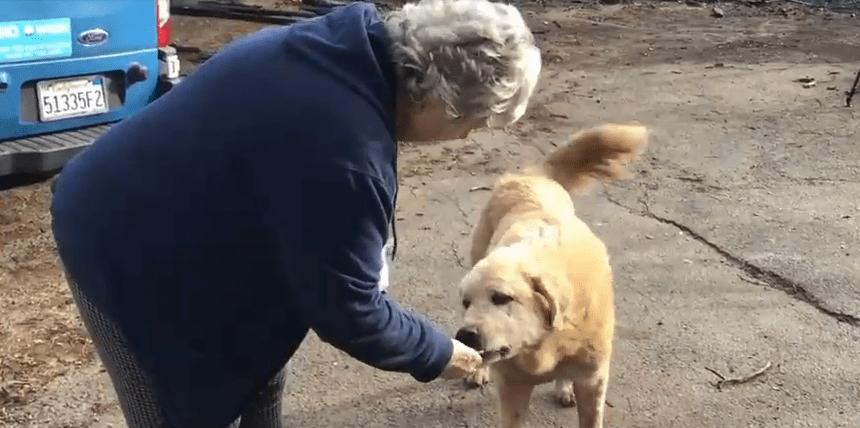 Целый месяц пёс сторожил сгоревший дом, надеясь, что его хозяева вернутся