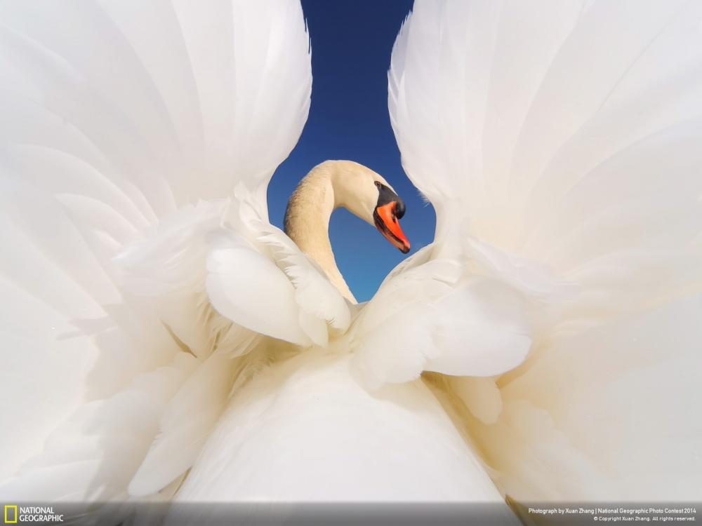 Красота спасет мир!!!