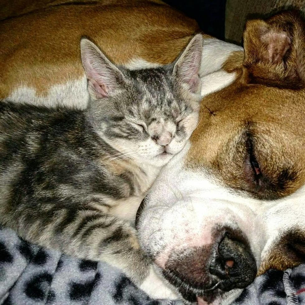 Испуганные глазки, торчащий зубик… На ступеньках медпункта сидел котёнок и ловил своё Счастье