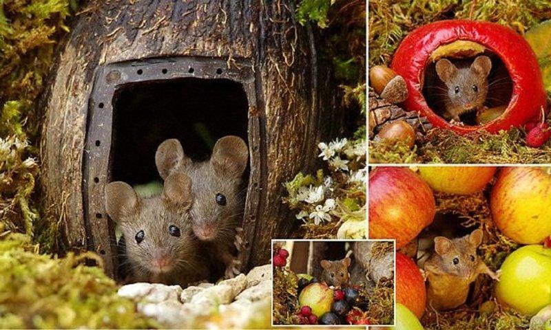 Фотограф построил для садовых мышей игровой городок