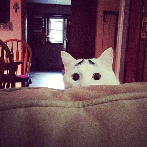 Сэм, кот с бровями
