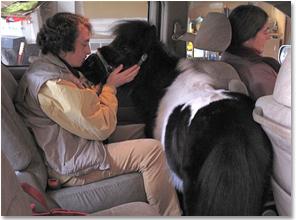 Как животные выполняют за людей их работу