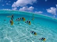 Моря и океаны 29