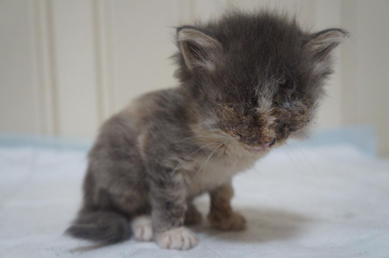 Вместо того чтобы лечить, котенка выбросили на улицу… Но Плюша хочет быть здоровой!