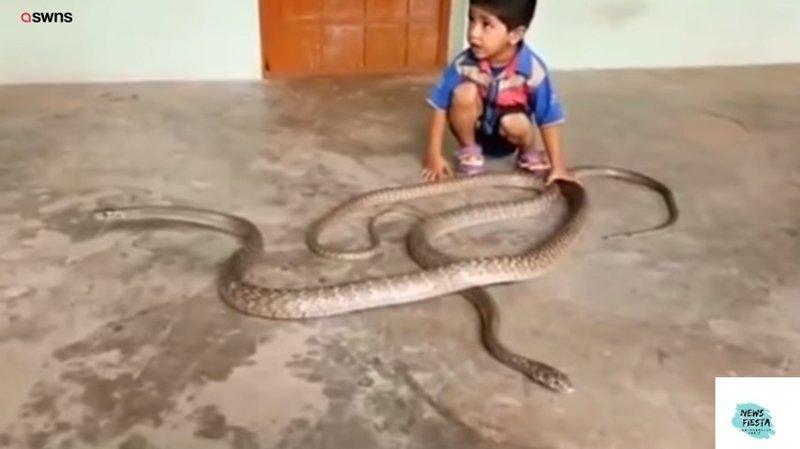 Опасная игра ребёнка со змеями