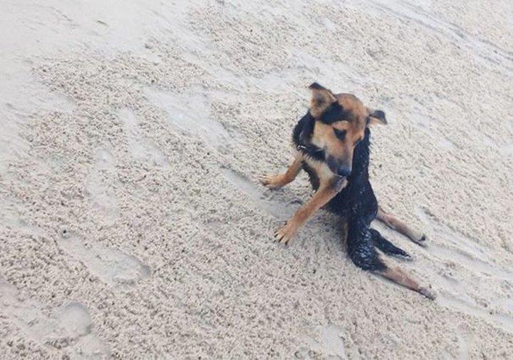 Трогательная история парализованного пса Лео
