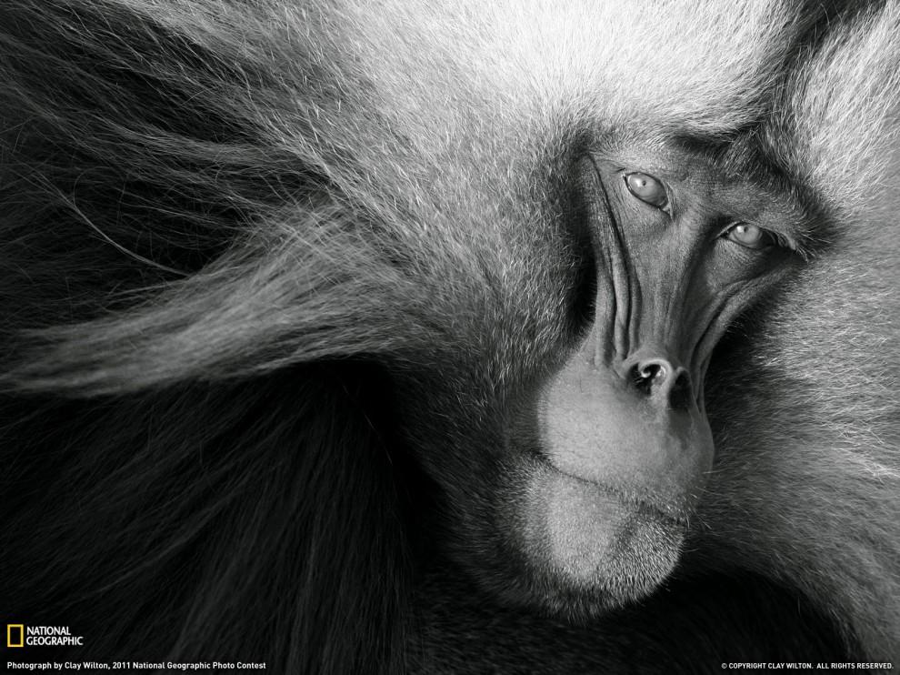 811 990x742 Лучшие фото National Geographic за декабрь 2011