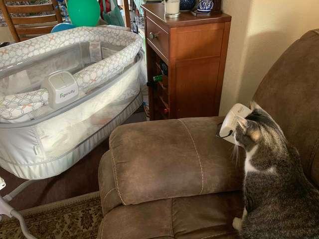 Котик уверен, что детское кресло купили исключительно для него