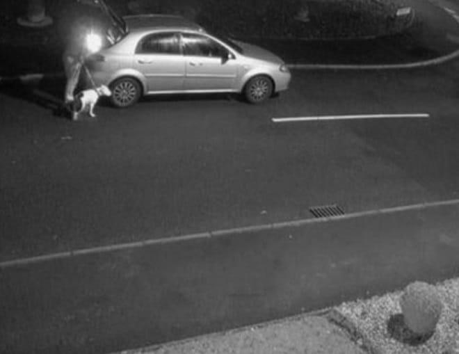 Хозяин бросил пса на улице и умчался на автомобиле. Но теперь питомец стал знаменитым и обрел новый дом